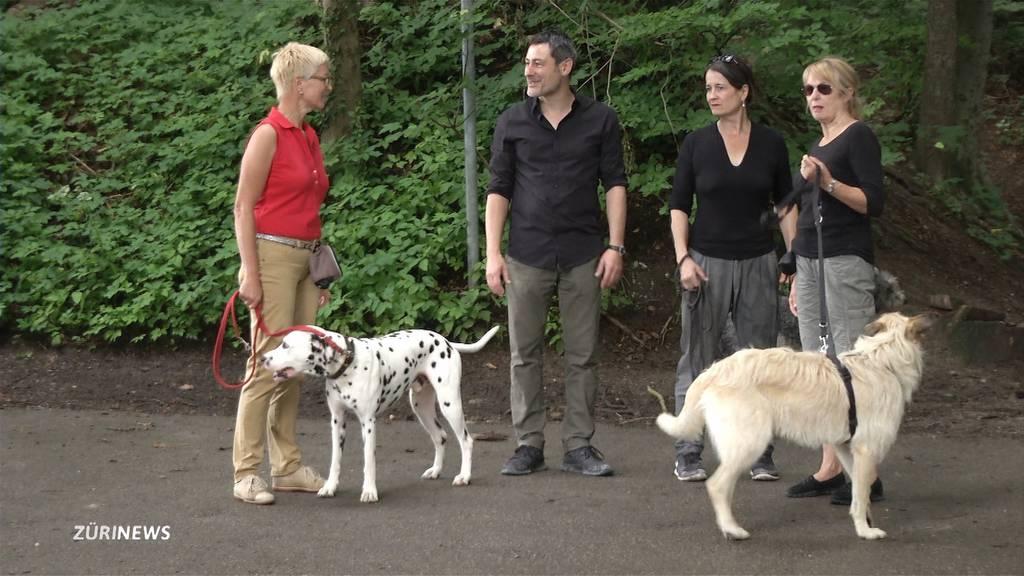 Wütende Hundehalter: Bundesgericht stützt Leinenzwang in Wil