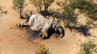 HANDOUT - Ein toter Elefant liegt in einem Gebüsch. Im südafrikanischen Safari-Paradies Botsuana treibt ein mysteriöses Elefantensterben Tierschützer um. Foto: Uncredited/hons/AP/dpa - ACHTUNG: Nur zur redaktionellen Verwendung im Zusammenhang mit der aktuellen Berichterstattung und nur mit vollständiger Nennung des vorstehenden Credits