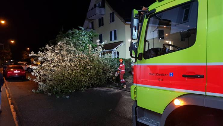 Aufgrund des Unwetters stürzten viele Bäume, wie hier auf der Bergstrasse, ...