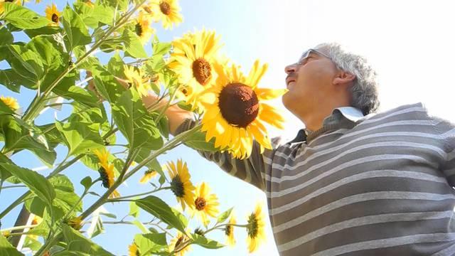 17, 33, 19, 6, 71: Sonnenblumenblütenzählen ist eine Wissenschaft für sich.