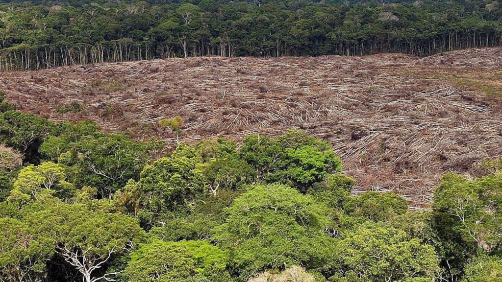 Tropenwald-Abholzung im «Corona-Monat» März mehr als verdoppelt