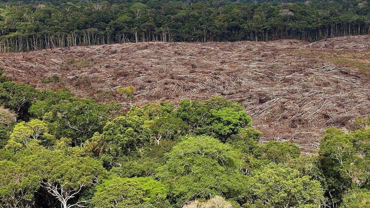 Im Zuge der sich ausbreitenden Covid-19-Pandemie hat die Zerstörung des Tropenwaldes weltweit massiv zugenommen. (Symbolbild)