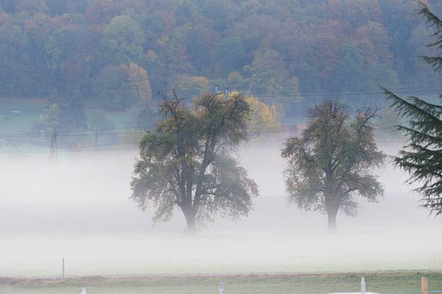 Wie von Watte umhüllt – alte Obstbäume in Hägendorf.