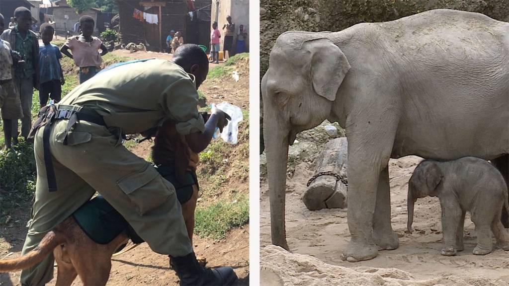 Bluthunde / Nachwuchs im Elefantenpark