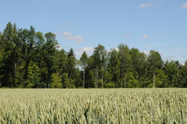 Die Holzhauer rodeten das Waldstück, das sich auf diesem Landwirtschaftsland befand.