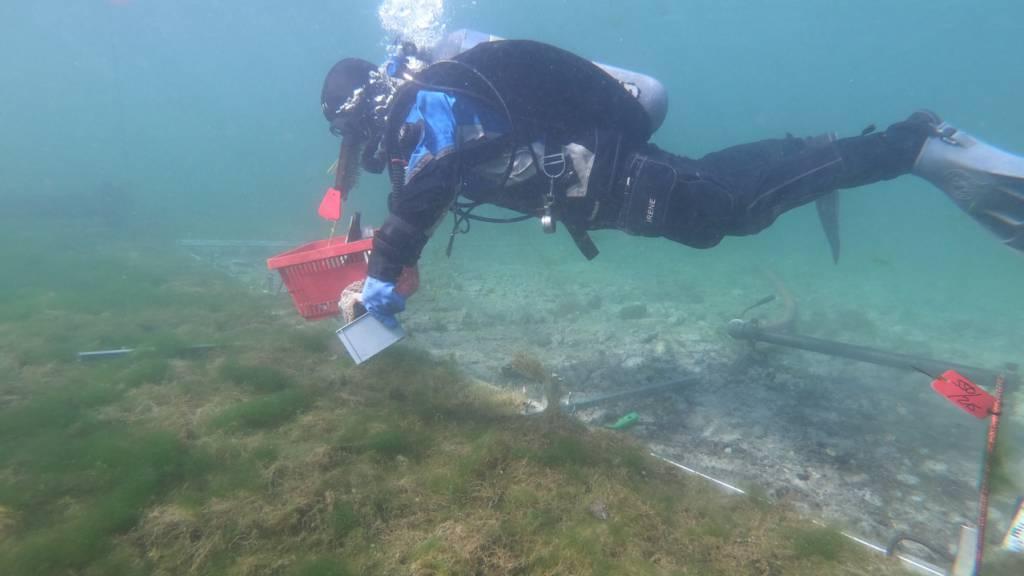 Taucharchäologen kontrollieren in der Bucht vor Steckborn die Fundstellen der Pfahlbausiedlungen auf Erosionen.