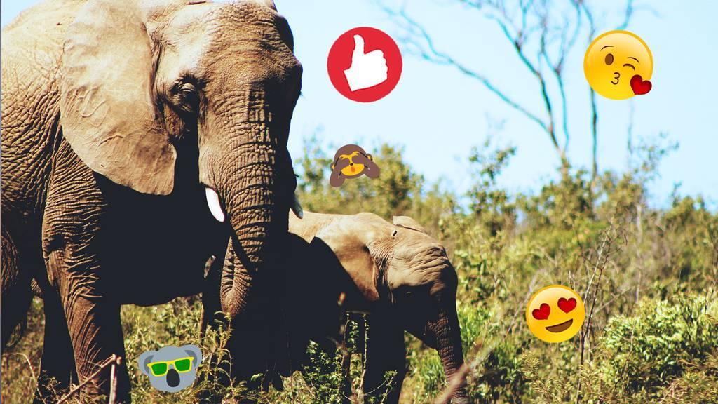 Wie das Geräusch von Bienen Elefanten vor Zügen warnen soll