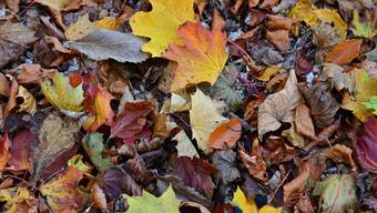 Herbstimpressionen, wie man sie kennt. Doch der Schein trügt, wie bei allen Jahreszeiten.
