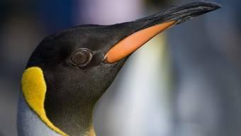 Der Pinguin war am Samstagabend gestohlen worden (Symbolbild)