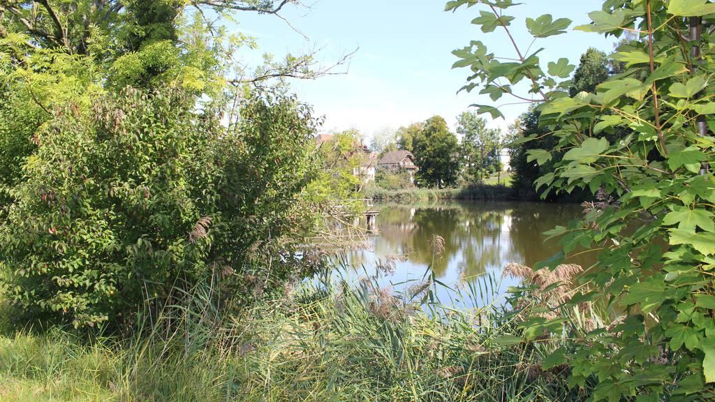 Ein neuer Park auf dem Burgweiher-Areal