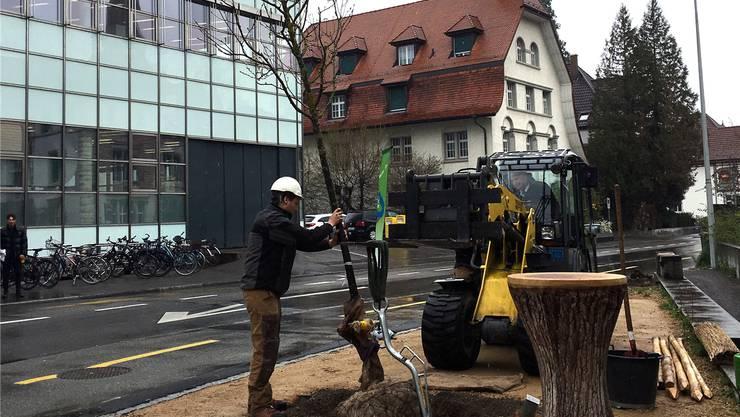 Baudirektor Stephan Attiger (im Kleinbagger) hebt den Baum in die Grube.