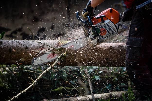 Seit rund drei Wochen arbeitet der Forstbetrieb in Bellach.