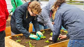 """Einmal selber anfassen, selber anpflanzen und ernten: """"Urban Gardening"""" gilt längst als Kult."""