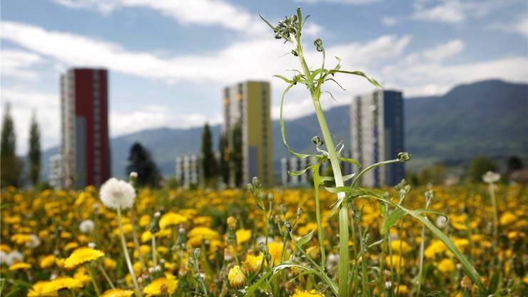 «Blühende Landschaften» im Westen: Hier soll die Stadt in den nächsten Jahrzehnten wachsen.