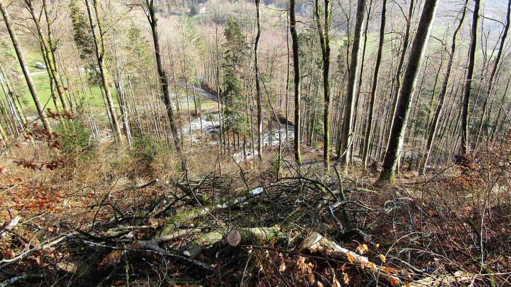 In diesem steilen Waldstück passierte der tragische Unfall.