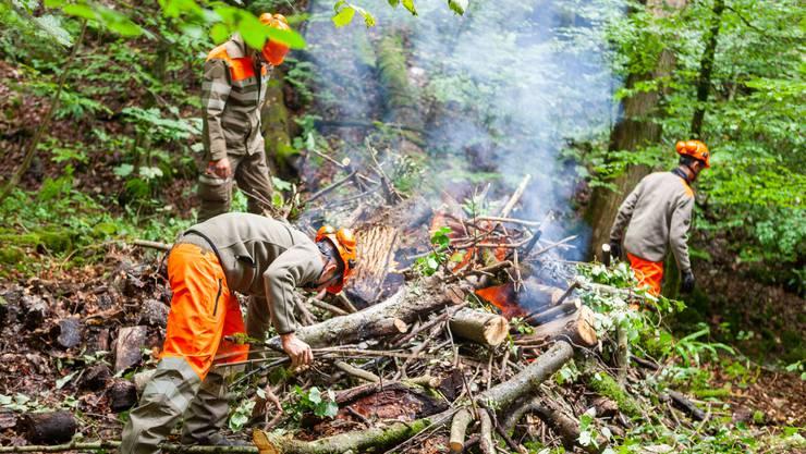 Das geräumte Holz wird direkt im Wald verbrannt.