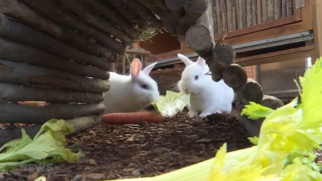 Tierquälerei: Kaninchen im Wald ausgesetzt