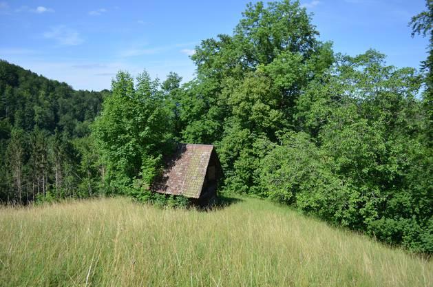 Ein Schmuckstück ganz einsam - Die Grosse Weid bei Arboldswil.