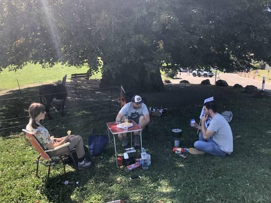 Unsere Wanderesel geniessen ein gemütliches Mittagessen im Schatten der Linde von Linn.
