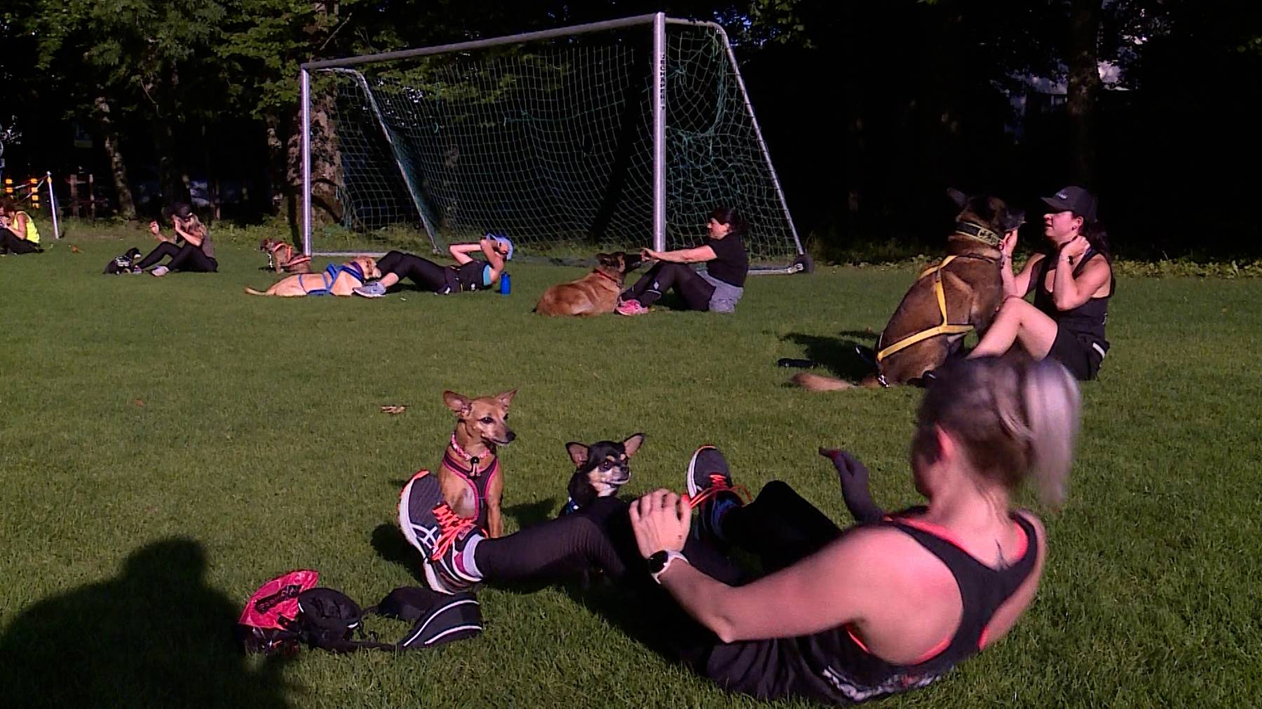 Dog Bootcamp