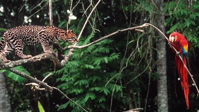 Dschungel in Guatemala (Archiv)