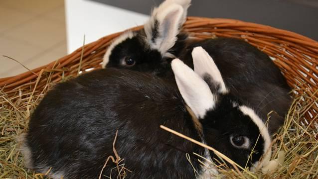 Die beiden überlebenden Kaninchen sind nun in Sicherheit.
