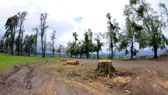 Auf dem Heiternplatz ist die Sicherheit wieder hergestellt, alle vom Sturm zerstörten Bäume wurden gefällt und bereits abtransportiert.  ran Auf dem Heiternplatz sind alle vom Sturm zerstörten Bäume gefällt und abtransportiert worden.  ran