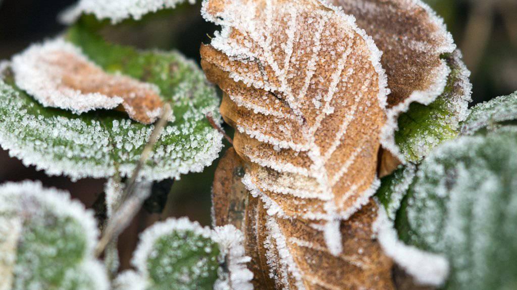 Frostige Kälte am letzten Oktobermorgen in der Schweiz. (Archivbild)