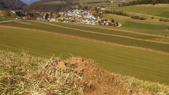 Für die Ablagerung von Aushubmaterial vorgesehen: Teilansicht der Senke im Gebiet Buech in Herznach, wo die Deponie ab 2017 in Betrieb genommen werden soll.