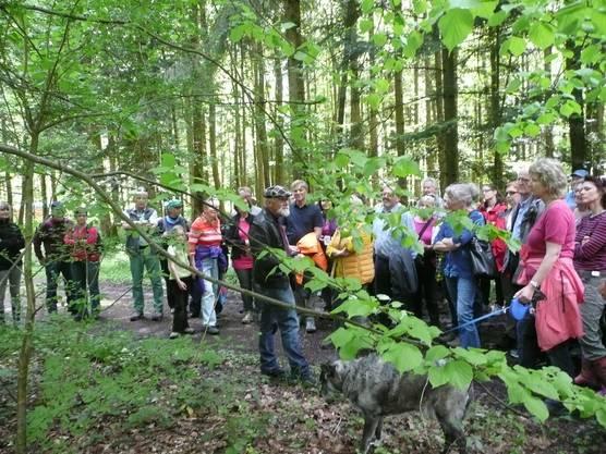 Oskar Marti (Chrüter Oski) informierte an einem Kräuter-Waldgang mit mehr als 130 Personen was im Frühling die Natur im Wald alles Köstliches zu bieten hat.