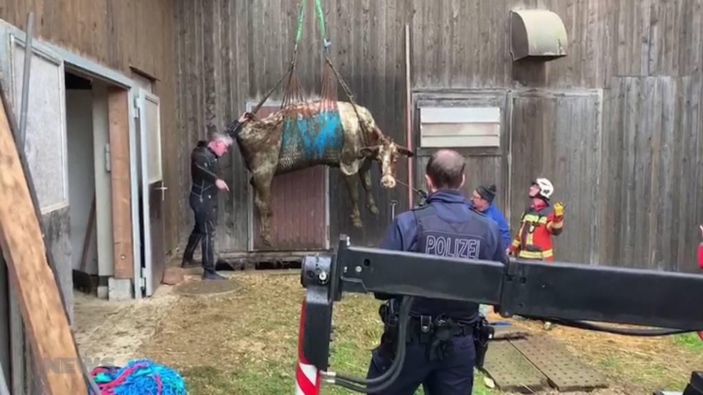 Aussergewöhnlicher Einsatz: Fünf Kühe aus Güllenloch gerettet