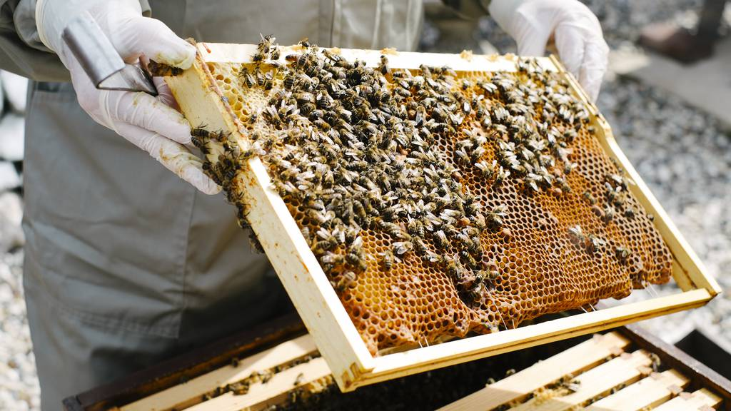 Nach Diebstahl von Bienenvölkern: Wer sind die Täter?