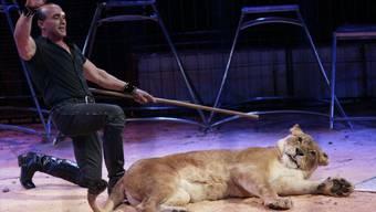 Bruno Raffo, Dompteur in dritter Generation, dressiert die Löwen.
