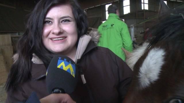 Happy End für 33 Pferde im Jura