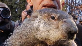 Der Film «Und täglich grüsst das Murmeltier» machte Phil weltberühmt