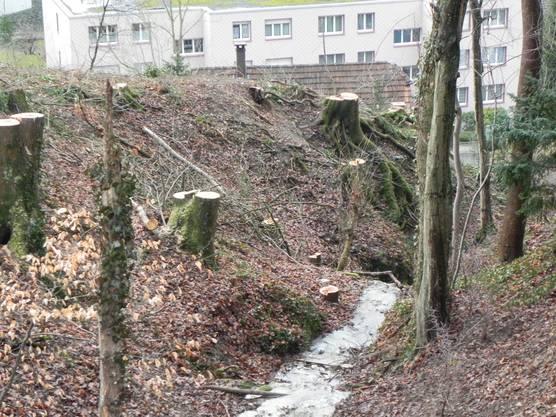 Kahlschlag im Böhliwald