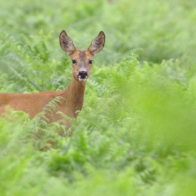 Wildschaden: Welche Versicherung bezahlt den Schaden?